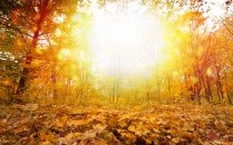 Giorno soleggiato dell'autunno in parco Immagini Stock