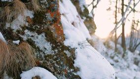 Giorno soleggiato delle montagne della neve del paesaggio della natura di inverno video d archivio