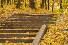 Giorno soleggiato di autunno, punti delle scale nel vecchio parco, molte fogliame caduto stagioni Sfondo naturale nel colore dora Immagine Stock