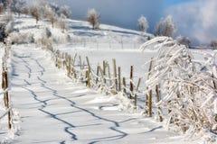Giorno soleggiato di un inverno, sulle colline selvagge della Transilvania Immagine Stock