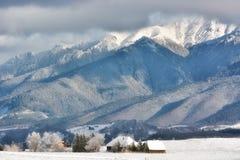Giorno soleggiato di un inverno, sulle colline selvagge della Transilvania con le montagne di Bucegi nel fondo Immagine Stock