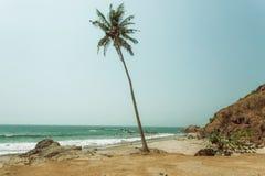 Giorno soleggiato e palma sola sulla spiaggia sabbiosa Acque calme dell'oceano e di nessuno Immagini Stock Libere da Diritti