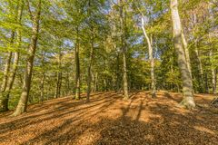 Giorno soleggiato fantastico dell'autunno con luce solare che viene attraverso gli alberi immagini stock libere da diritti