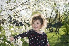 Giorno soleggiato luminoso della primavera nel frutteto di ciliegia sbocciante un piccolo gi Fotografia Stock Libera da Diritti