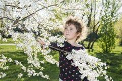 Giorno soleggiato luminoso della primavera nel frutteto di ciliegia sbocciante un piccolo gi Fotografia Stock