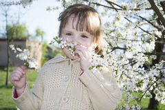 Giorno soleggiato luminoso della primavera nel frutteto di ciliegia sbocciante un piccolo gi Immagini Stock Libere da Diritti