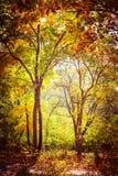 Giorno soleggiato nel parco di autunno con gli alberi variopinti Fotografia Stock Libera da Diritti