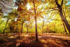 Giorno soleggiato nel parco di autunno con gli alberi variopinti Fotografia Stock