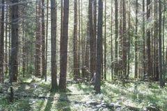 Giorno soleggiato nella foresta Fotografie Stock