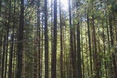 Giorno soleggiato nella foresta Fotografie Stock Libere da Diritti