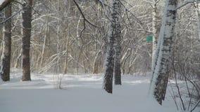 Giorno soleggiato nella foresta di inverno stock footage