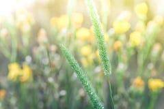 Giorno soleggiato stupefacente al prato di estate con i wildflowers Fotografie Stock