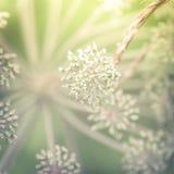 Giorno soleggiato stupefacente al prato di estate con i wildflowers Fotografia Stock Libera da Diritti
