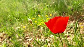 Giorno soleggiato in Turchia fotografie stock