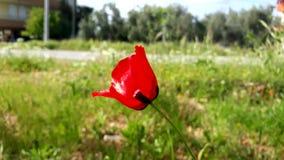 Giorno soleggiato in Turchia fotografia stock libera da diritti
