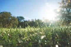 Giorno soleggiato in un parco con erba verde fresca fotografia stock