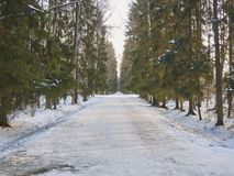 Giorno soleggiato in un parco di inverno Vicolo ed alberi Immagine Stock Libera da Diritti