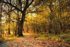 Giorno vago di autunno in foresta con il percorso Immagine Stock
