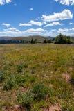 Giorno ventoso, prati alpini della montagna Ridge, Colorado Rockies del santuario Immagine Stock Libera da Diritti