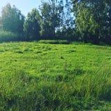 Giorno verde fotografie stock