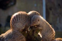 Giovane abbracciare simile a pelliccia degli animali Fotografia Stock