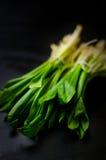 Giovane aglio selvaggio Immagini Stock