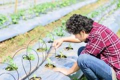 Giovane agricoltore asiatico che usando il sistema dell'irrigazione a goccia Fotografie Stock