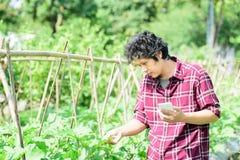 Giovane agricoltore asiatico che utilizza smartphone nel campo agricolo Fotografie Stock