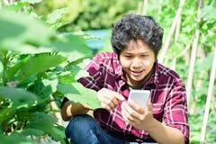 Giovane agricoltore asiatico che utilizza smartphone nel campo agricolo Immagini Stock Libere da Diritti