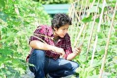 Giovane agricoltore asiatico che utilizza smartphone nell'agricoltura Fotografia Stock