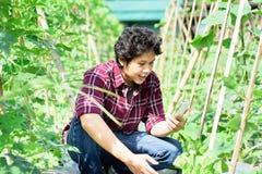 Giovane agricoltore asiatico che utilizza smartphone nell'agricoltura Fotografia Stock Libera da Diritti