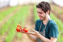 Giovane agricoltore attraente che raccoglie i pomodori Fotografie Stock Libere da Diritti