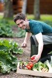 Giovane agricoltore attraente che raccoglie le verdure Immagine Stock Libera da Diritti