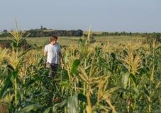 Giovane agricoltore che cammina sul campo durante il raccolto Fotografia Stock