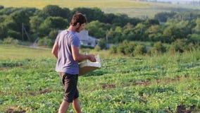Giovane agricoltore che cammina sul campo, guardante e raccogliente i meloni in scatola di legno video d archivio