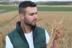 Giovane agricoltore che esamina grano nel campo Fotografie Stock Libere da Diritti