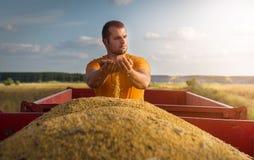 Giovane agricoltore che esamina i grani del cereale in rimorchio di trattore Fotografie Stock