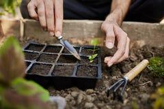 Giovane agricoltore che lavora nel suo giardino che si prepara per la stagione estiva Equipaggi tenero la piantatura del germogli Fotografia Stock Libera da Diritti