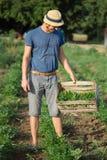 Giovane agricoltore che sta sul campo e che tiene scatola di legno con la pianta del prezzemolo Immagini Stock Libere da Diritti