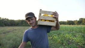 Giovane agricoltore che va sul campo con la scatola di legno di zucca organica del cespuglio archivi video