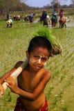 Giovane agricoltore del Myanmar che lavora nella risaia Fotografia Stock