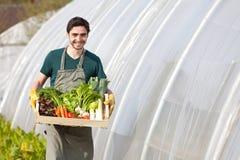 Giovane agricoltore felice con una cassa piena della verdura Immagine Stock
