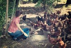 Giovane agricoltore femminile che dà alimentazione Fotografia Stock