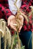 Giovane agricoltore femminile che tiene le orecchie mature del grano Concetto di organico Fotografia Stock