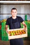 Giovane agricoltore maschio che prepara pomodoro alle vendite sul mercato di scatole di legno nello stoccaggio dell'azienda agric Immagine Stock