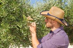 Giovane agricoltore nel boschetto di olivo Fotografia Stock Libera da Diritti