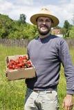 Giovane agricoltore nel giacimento della fragola che tiene una scatola di cartone w completo Fotografia Stock