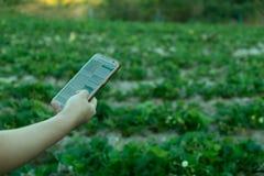 Giovane agricoltore osservando la verdura di alcuni grafici archivata in telefono cellulare, azienda agricola astuta moderna orga immagini stock