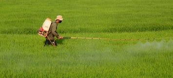 Giovane agricoltore vietnamita Fotografia Stock