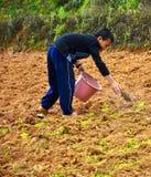 Giovane agricoltura di Chao Doi. Immagini Stock